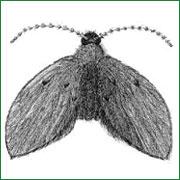 mosca drenaje 1