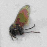 mosca drenaje 2
