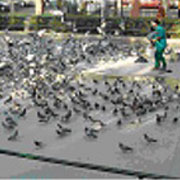 imagen de una actuación de personal del Ayuntamiento de Madrid con las palomas.