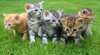 Varios gatitos