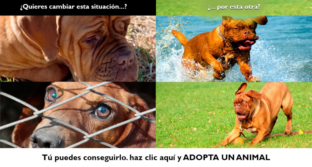 Adopta una animal
